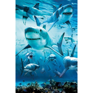 Shark - infested Poster, (61 x 91,5 cm)