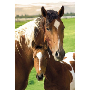 Horses - mare and foal Poster, (61 x 91,5 cm)
