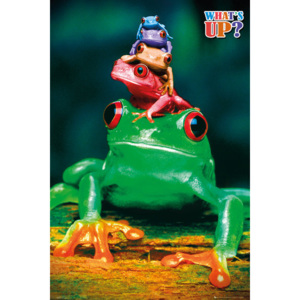 5 frogs Poster, (61 x 91,5 cm)