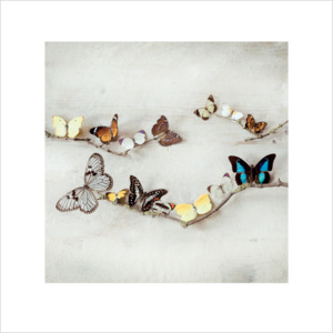 Ian Winstanley - Array of Butterflies Reproducere, (40 x 40 cm)