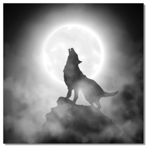 Wolf howling to the moon Tablou, (120 x 120 cm)
