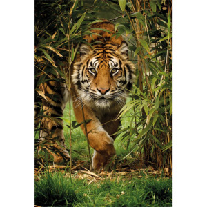 Poster - Tiger in bamboo