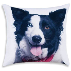 Față de pernă decorativă Border collie