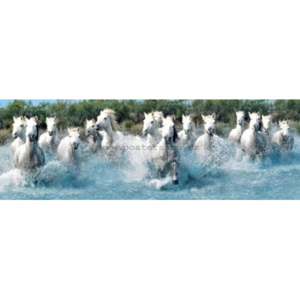 Poster - Camargue horses