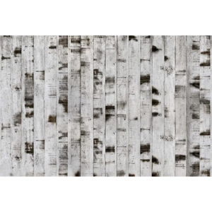 Tapet Metal Birch Walls Rebel Walls