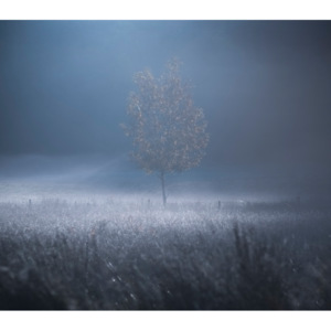 Fotografii artistice A memory of Light, david ahern