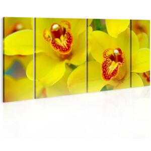 Tablou Bimago - Orchids - intensity of yellow color 60x30