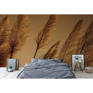 Fototapet GLIX - Pampas Grasses Blowing In The Wind + adeziv GRATUIT Tapet nețesute - 416x254 cm