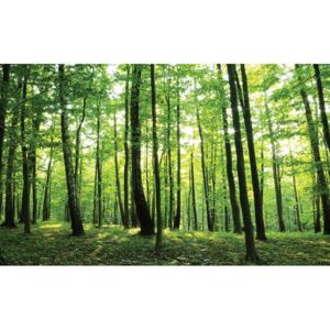 Forest Trees Green Nature Fototapet, (152.5 x 104 cm)