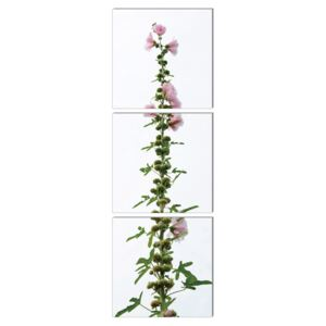 Modern design - flower with pink blossoms Tablou, (50 x 150 cm)