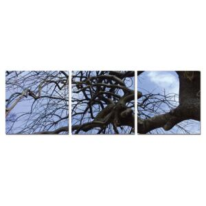 Tree branches Tablou, (150 x 50 cm)