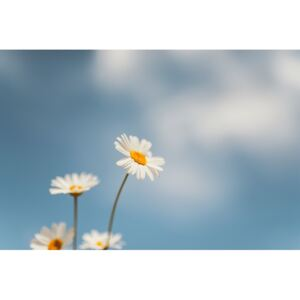 Fotografii artistice Flowers with a background sky, Javier Pardina