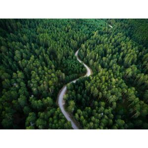 Fotografii artistice Aerial road crossing the forest, Javier Pardina