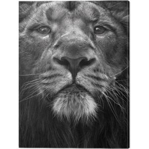 Tablou Canvas Marina Cano - The King, (40 x 50 cm)