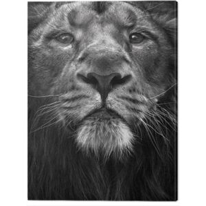 Tablou Canvas Marina Cano - The King, (30 x 40 cm)