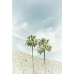 Fotografii artistice Palm Trees in the desert | Vintage, Melanie Viola