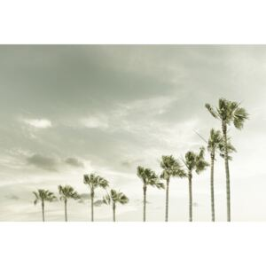 Fotografii artistice Vintage Palm Trees at the beach, Melanie Viola
