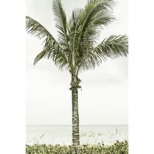Fotografii artistice Palm Tree at the beach | Vintage, Melanie Viola