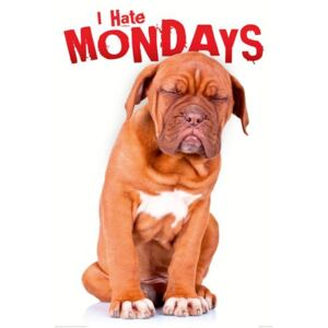 Poster - I Hate Mondays