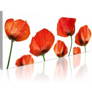 Tablou Bimago - Poppies on a white background 120x40 cm