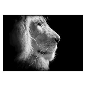 Poster DecoKing Lion King, 50 x 40 cm, negru - alb