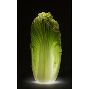 Chinese cabbage, (24.7 x 40 cm)