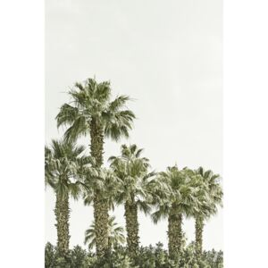 Vintage palm trees at the beach, (85 x 128 cm)