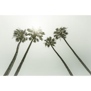 Vintage palm trees in the sun, (128 x 85 cm)