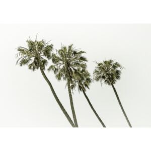 Palm trees by the sea | Vintage, (128 x 85 cm)