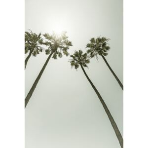 Palm Trees in the sun | Vintage, (85 x 128 cm)