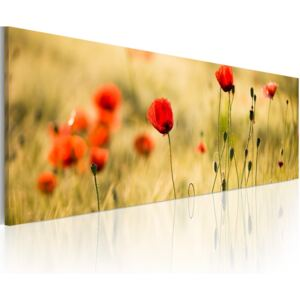 Tablou Bimago - Spring poppies meadow 120x40 cm