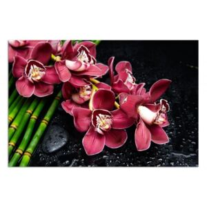 Tablou CARO - Orchid On Bamboo 40x30 cm