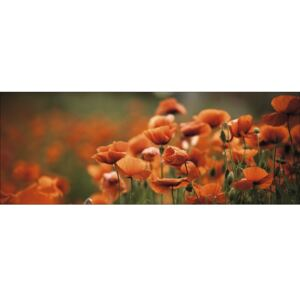 Tablou sticla Orange Poppies I 50x125 cm