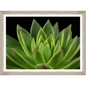 Tablou Framed Art Echeveria
