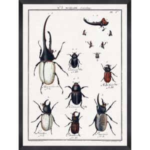 Tablou Framed Art Entomology I