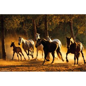Poster Horses Andaluces, (91.5 x 61 cm)
