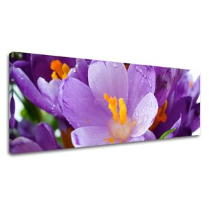 Tablouri canvas FLORI Super-Panorama KV137E14 (tablouri)