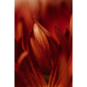 Fotografii artistice Abstract detail of red flowers, Javier Pardina