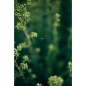 Fotografii artistice Wasp- on the plants, Javier Pardina