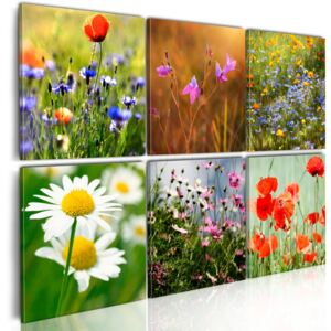 Tablou Bimago - Thousands colors of meadow 60x40 cm