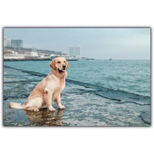 Tablou modern pe panou - beautiful golden retriever dog