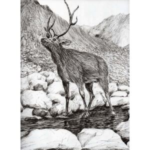 Stag, 2011, Reproducere, Vincent Alexander Booth