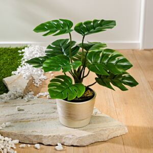 Astoreo Planta Monstera