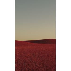 Minimal landscpases of a red grass at with a gradient sky series 1, (22.5 x 40 cm)