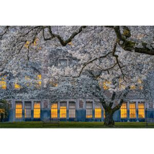 Fotografii artistice Morning at University of Washington, Lydia Jacobs