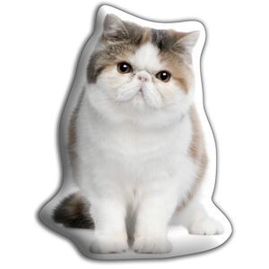 Pernă Adorable Cushions Exotic Shorthair