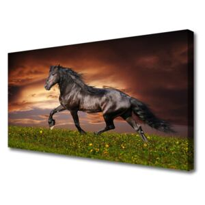 Tablou pe panza canvas Black Horse Meadow Animale Negru Verde Roșu