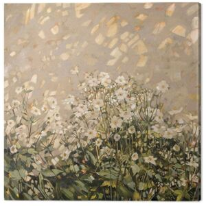 Anne-Marie Butlin - Morning Sun on Japanese Anemones Tablou Canvas, (60 x 60 cm)