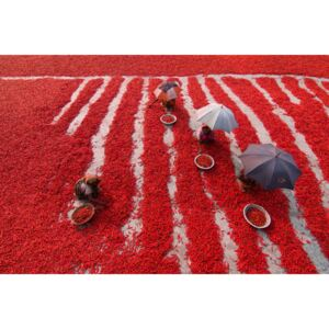 Fotografii artistice Red Chilies Pickers, Azim Khan Ronnie