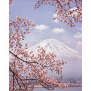 Fotografii artistice Mt. Fuji in the cherry blossoms, Makiko Samejima